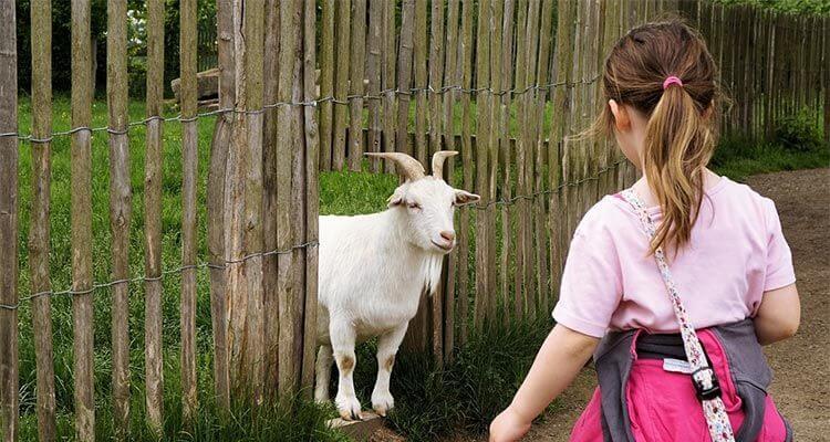 Casas Rurales para ir con Niños en Castilla La Mancha